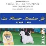 sunflower meadow jp(東京都・小金井市)の口コミ評判